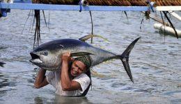 Papa: cristãos aprendam lição dada pelos pescadores