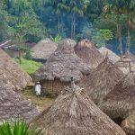 Por que a Igreja se preocupa com a Amazônia?